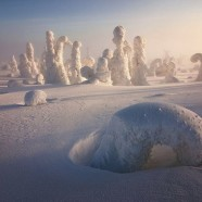 Beautiful Frozen Jungle in Finland – Natural Wonder – III