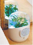 Homemade Fresh Air Purifier of Plants