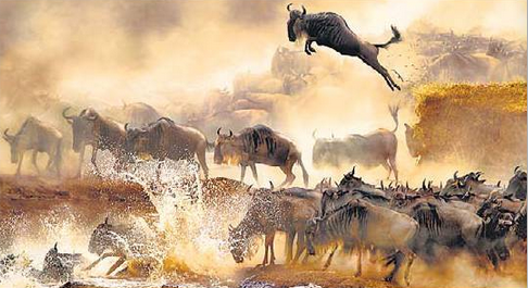 Five Of The Largest Migrations On Earth.