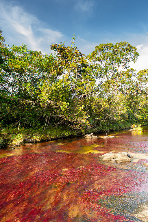 512px-Caño_Cristales_01