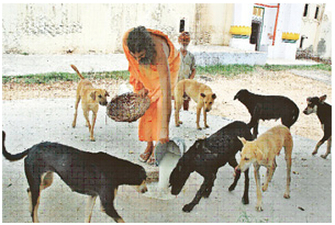 Incredible India – Millionaire Dogs Are Worshipped Daily