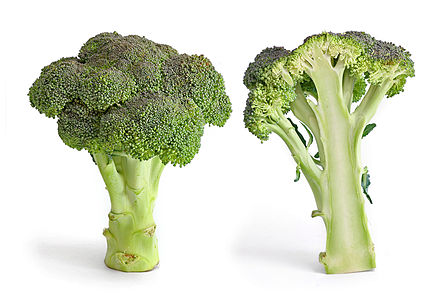 440px-Broccoli_and_cross_section_edit