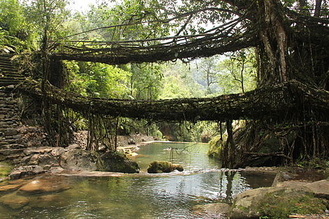 In Spotlight the Fascinating and Awesome Root Bridges