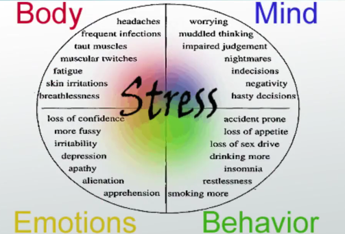 stress and its effects on young Stress and cognition 6 cases of stress and coping with stress but there are presently few data available to test the adequacy of neufield's theory emergencies often create acute conditions of stress, but these effects subside after the emergency has passed other conditions that are non-normal but might not involve emergencies can also be.