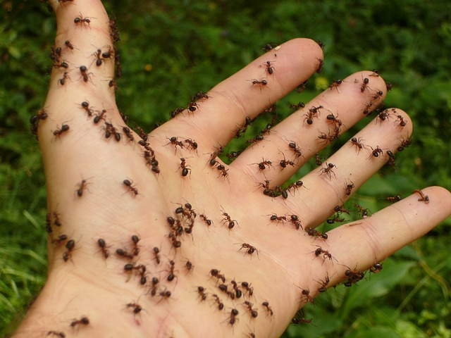 home remedies for ants