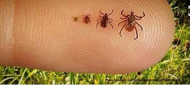 How to be Safe From Ticks